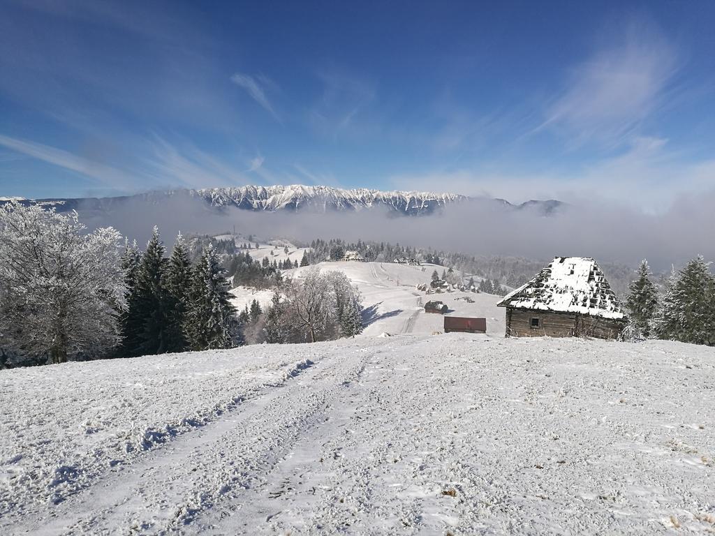 iarna amfiteatrul transilvania
