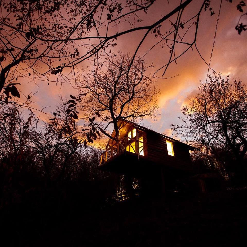 tree cottage pesteana
