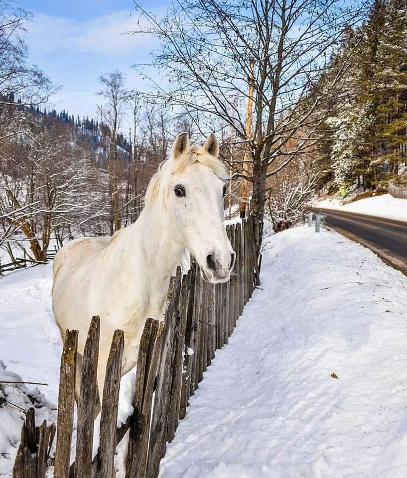 iarna in bucovina