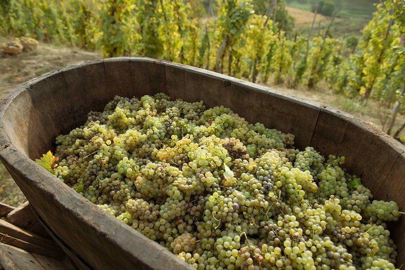 vinuri richis